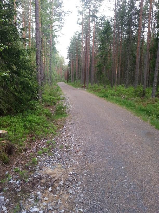 Bilde fra stien rett etter parkeingen ved Fjuk